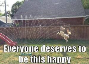 Happiness is a lawn sprinkler